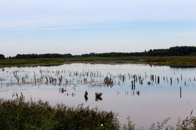 Een meer met verschillende planten