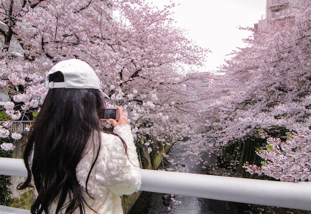 Een meisje dat een foto van volledige bloeiende japanse kersen neemt bloeit bomen