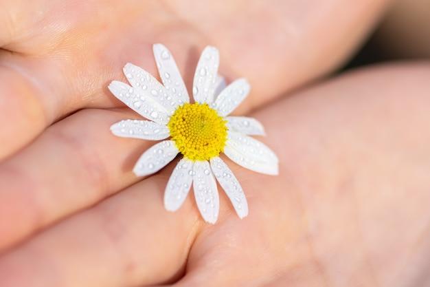 Een meisje houdt een bloem van een veldkamille in haar handen