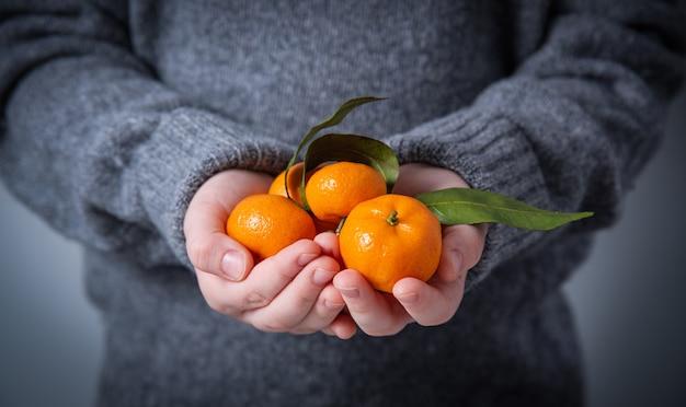 Een meisje in een grijze gebreide trui houdt een handvol verse zoete mandarijnen op een grijze achtergrond. afbeelding sluiten