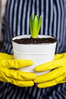 Een meisje in gele handschoenen houdt een getransplanteerde hyacint vast in een pot tegen de achtergrond van een gestreepte schort.