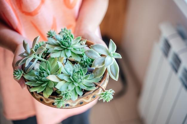 Een meisje met verschillende soorten vetplanten in de pot