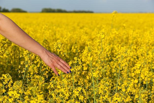 Een meisje raakt de bloeiende gele bloemen van verkrachting een hand aan