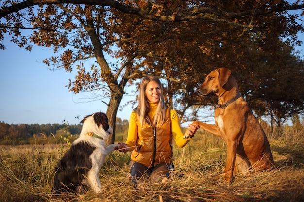 Een meisje, twee honden: border collie en rhodesian ridgeback zittend op het herfstgras. gele natuur achtergrond