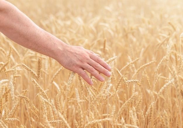 Een menselijke hand over het tarweveld