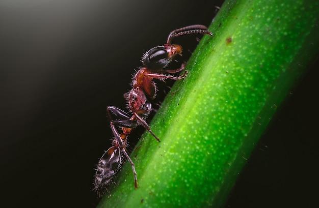 Een mier op een groene plant met een donkere muur
