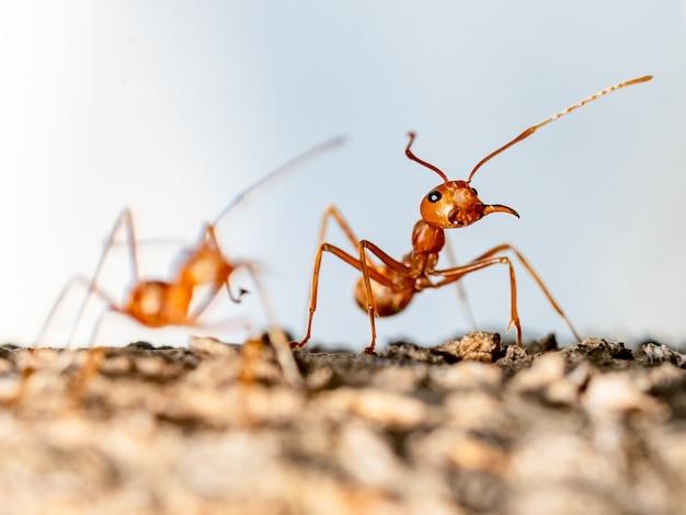 Een mier toont actie op boom op vaag