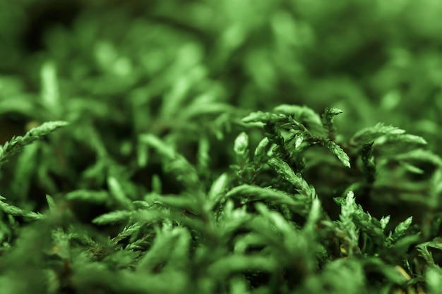 Een model van groen mos
