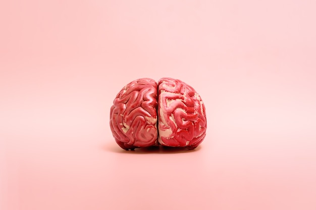 Een model van het menselijk brein op een roze achtergrond met kopieerruimte.