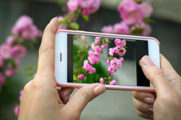 Een momentopname van roze bloemen op een smartphone. een meisje houdt de telefoon vast en maakt een mooie foto.