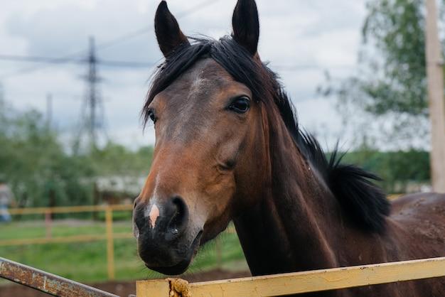 Een mooi en gezond paard lopen op de ranch. veehouderij en paardenfokkerij.