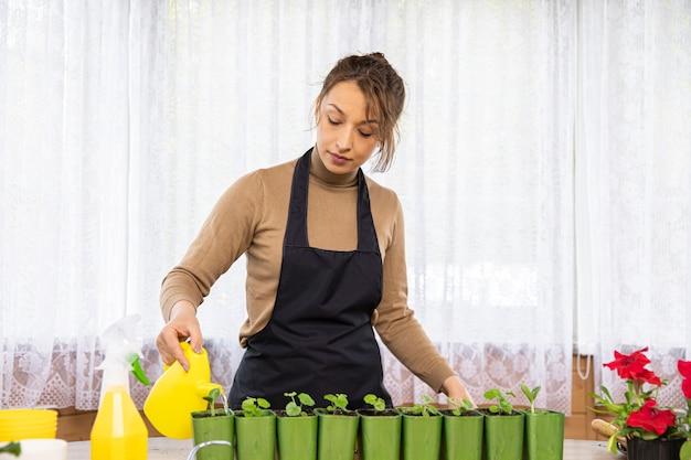 Een mooie blanke huisvrouw in een schort die microgreens in potten thuis water geeft. lente concept, natuur en zorg. thuis planten kweken en kweken.