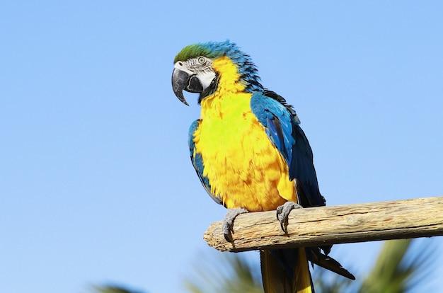 Een mooie blauwe en gele papegaai