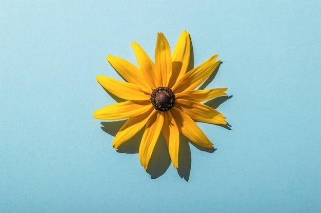 Een mooie gele bloem op een blauwe achtergrond. plat leggen.