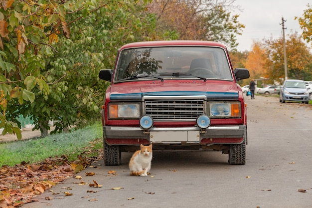 Een mooie gemberkat zit dichtbij een rode auto. herfst stad landschap.