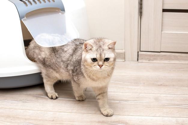 Een mooie grijze kat komt uit de deur van een grote gesloten kattenbak in de kamer
