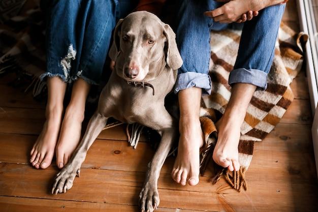 Een mooie hond ligt op de grond aan de voeten van de eigenaar. bovenaanzicht van een grote, goed verzorgde hond die op de vloer ligt in de buurt van de benen van de eigenaren