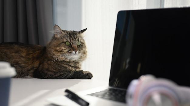 Een mooie kat liggend op witte tafel met laptop en koptelefoon in comfortabel huis.