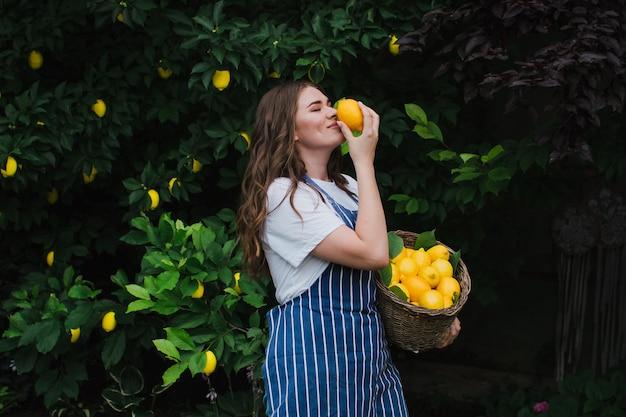 Een mooie meisjestuinman verzamelt een oogst van citroenen in een mand en snuift de citroen