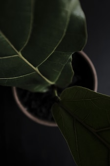Een mooie plant close-up