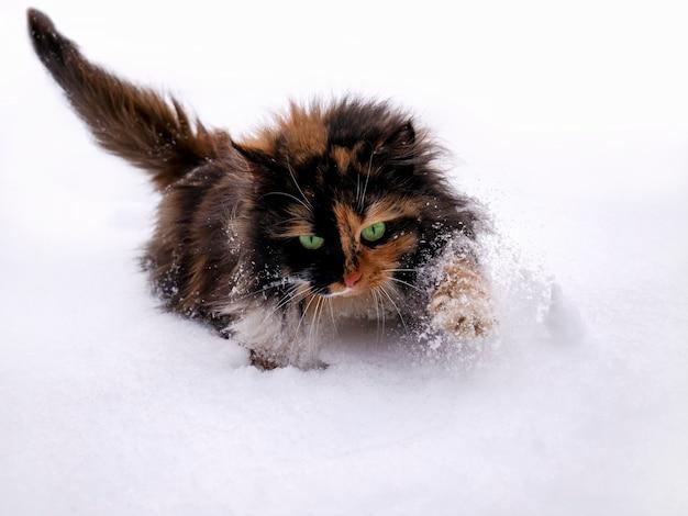 Een mooie pluizige kat met groene ogen loopt bij koud weer in de sneeuw. koude winter, grote sneeuwbanken, sneeuwval.
