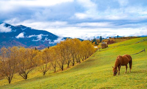 Een mooie sierlijke hengst loopt langs een groen veld en eet sappig vers gras tegen de achtergrond van de prachtige natuur van de karpaten