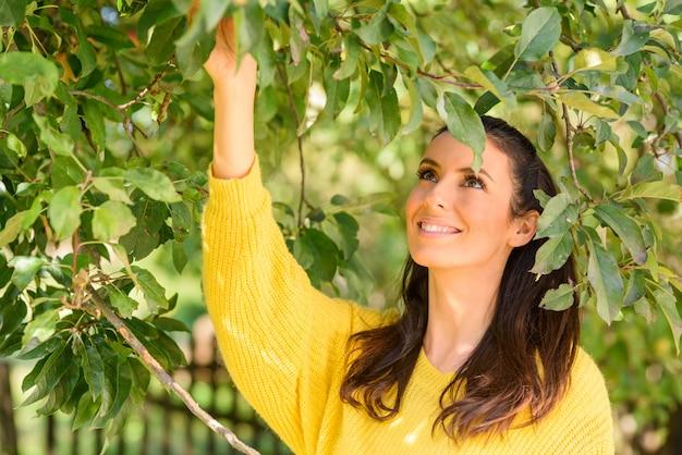 Een mooie vrouw die appelen van een boom in de herfst oogst