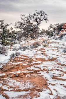 Een mooie winterdag in de winter na zware sneeuwval, canyonlands national park