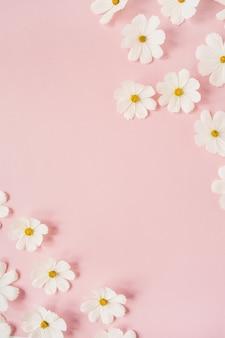Een mooie witte kamille, madeliefjebloemen op lichtroze. vakantie, huwelijk, verjaardag, jubileumconcept