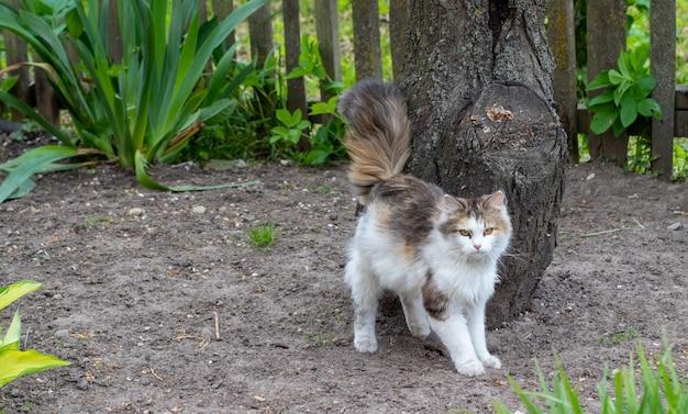 Een mooie witte kat kijkt naar de gebeurtenissen in de tuin