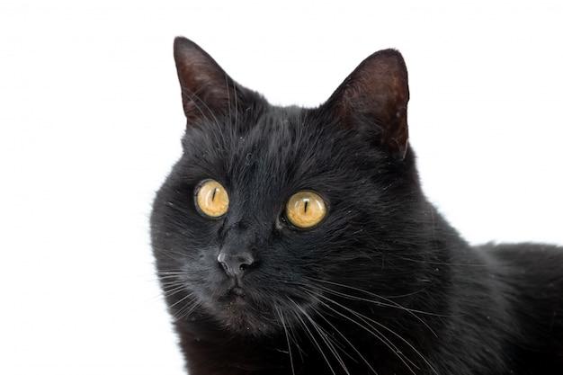 Een mooie zwarte kat stelt op een geïsoleerd wit