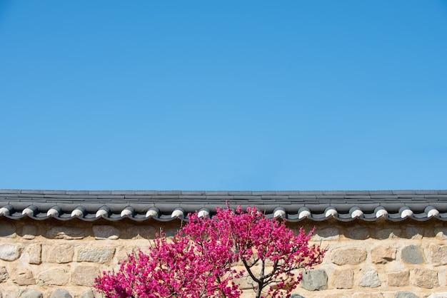 Een muur van blauwe lucht en rode pruimenbloesem