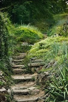 Een mysterieuze, half verwoeste stenen trap leidt naar bosstruiken.