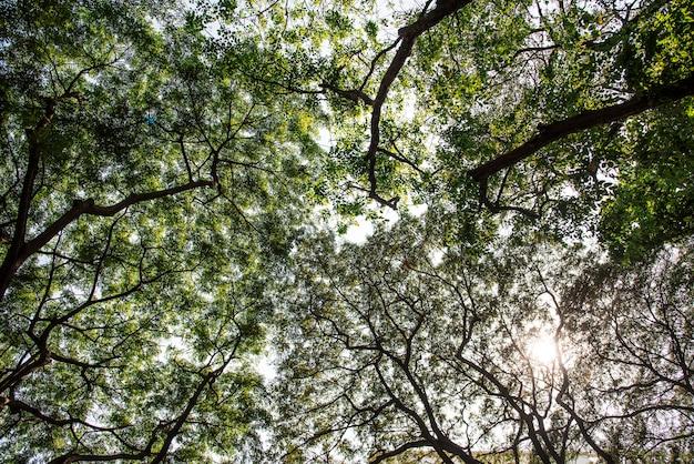 Een natuurlijk groen gebladerte in een park