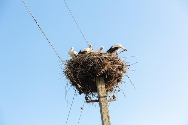 Een nest met ooievaars op een paal van een hoogspanningslijn in een dorp.