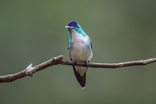 Een nieuwsgierige blik van een kleine kolibrie