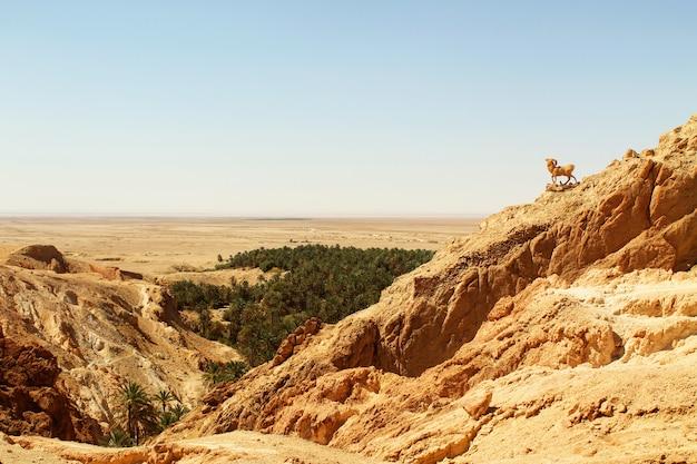 Een oase in de hete woestijn van de sahara, tunesië