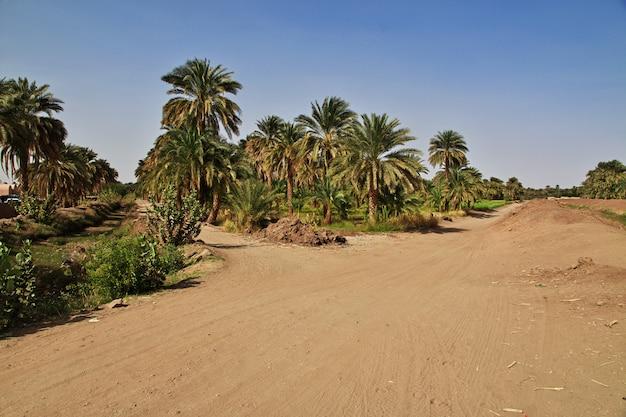 Een oase in de sahara woestijn, afrika
