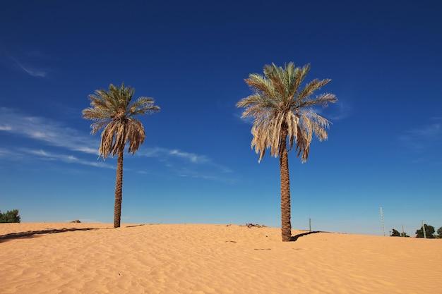 Een oase in de sahara-woestijn in het hart van afrika