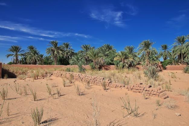 Een oase in de sahara woestijn in het hart van afrika