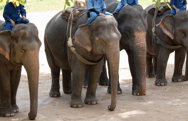 Een olifant en mahout in thailand.