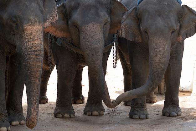 Een olifant staat op de grond. in thailand.