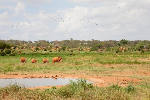 Een olifantenfamilie komt naar de drinkplaats