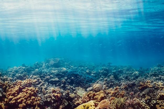 Een onderwater koraalrif aan de rode zee