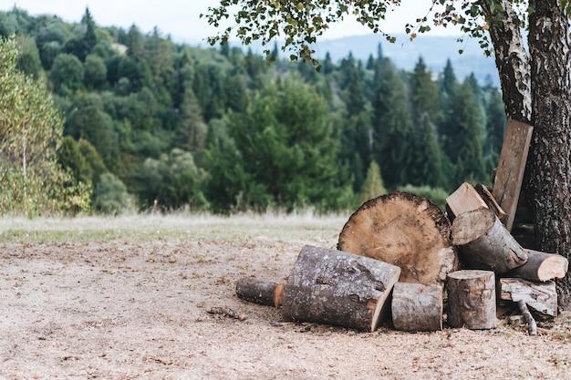 Een open plek in het bos met gevouwen brandhout voor een vuurhaard tegen de achtergrond van bomen.