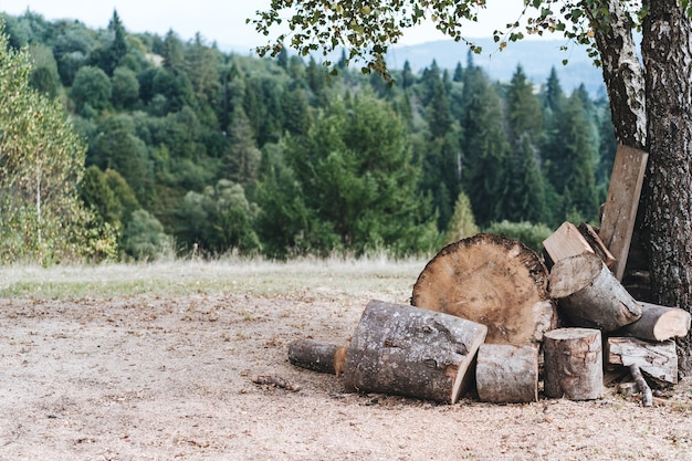 Een open plek in het bos met gevouwen brandhout voor een vuurhaard