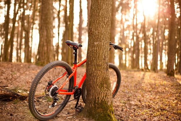 Een oranje fiets met 29 inch wielen staat bij een boom in het bos in het zonlicht.