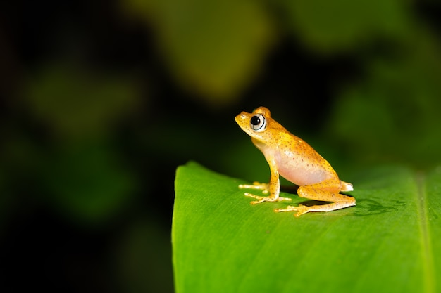 Een oranje kleine kikker op een groen blad in madagaskar