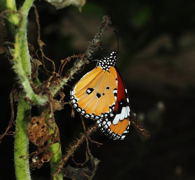 Een oranje vlinder rust op droge klimop