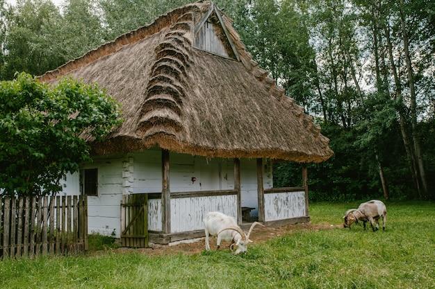 Een oud houten huis met een rietje.
